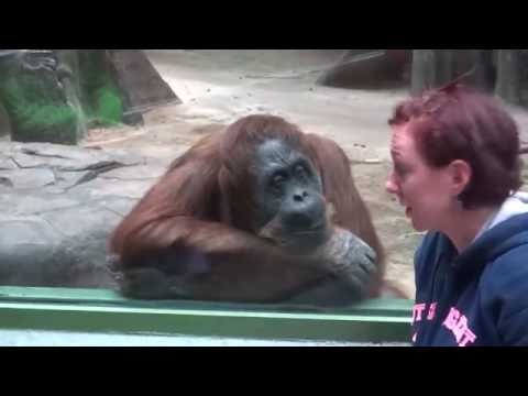 MONKEYS   Funny Animals Videos   Funny Monkey Videos   Funny Monkeys At The Zoo