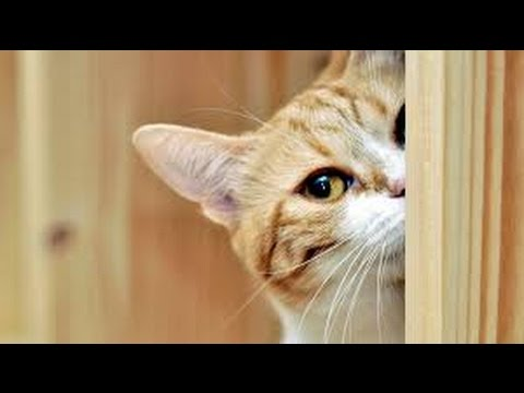 Curious cats – Funny cat Compilation 2017