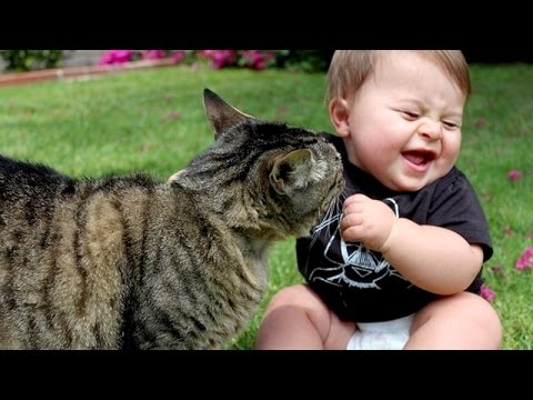 Funny cats annoying babies – Cute cat & baby compilation