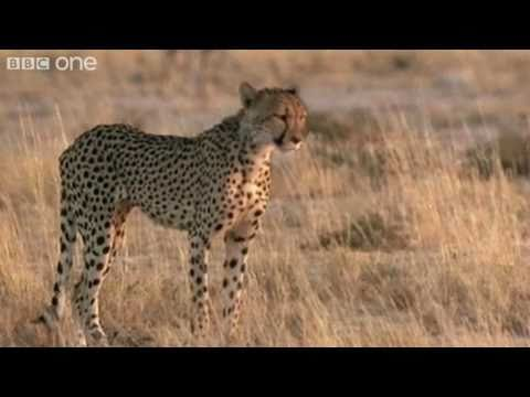 Funny Talking Animals – Walk on the Wild Side – Series 2, Episode 5, Preview – BBC One