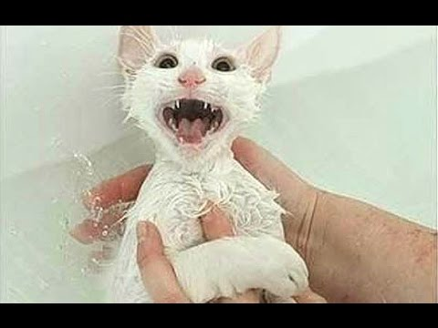 """Cats Saying """"No"""" to Bath – A Funny Cats In Water Compilation"""