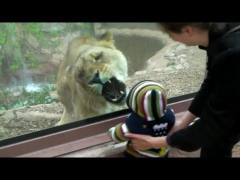 Animals Try To Attack Kids at the zoo – funny Animal video 2016