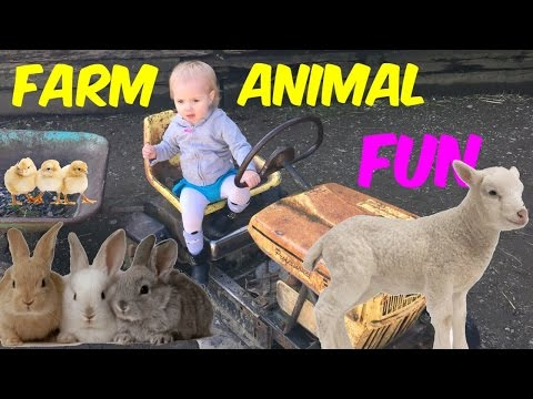 Cute Baby Farm Animals at Petting Zoo at Aldor Acres