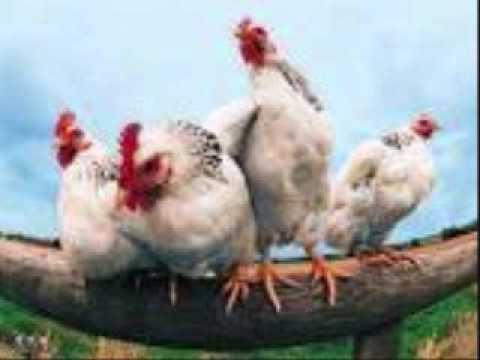 FFA (Funny Farm Animals)