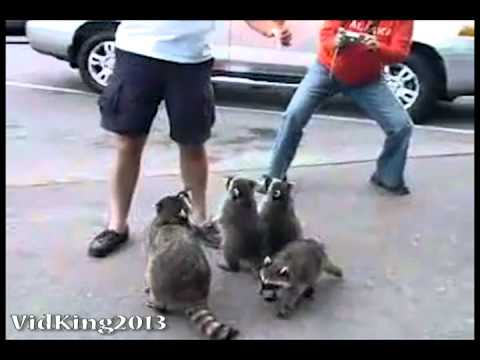 Funny Animals Compilation 2013