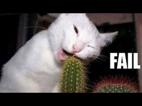 Funny Cats Compilation – Funny Videos 2014 – Funny Animals