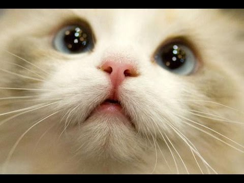 BEST 2 HOUR LONG FUNNY CAT COMPILATION – BIGGEST VIDEO of Funny Kitty Cat Fails & Kitten Moments