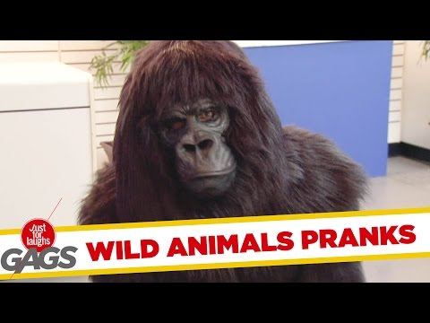 Best Wild Animals Pranks – Best of Just for Laughs Gags