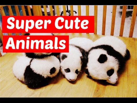 Super cute baby animals  – Funny Wild Animal