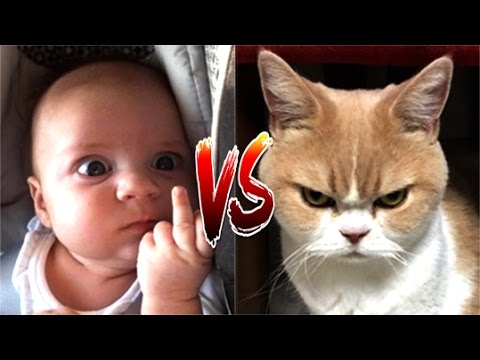 Funny Cat VS Baby in the world Compilation #2 – Mkls
