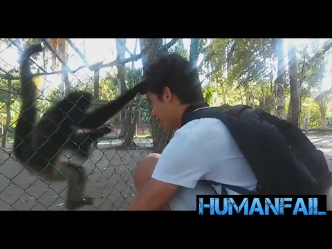BEST Epic FUNNY Animals Attack Compilation by HumanFail