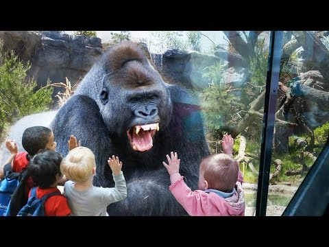 Funny Animals at the ZOO (HD) [Funny Pets]