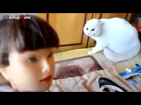 Funny Cats Getting Scared Compilation 2016