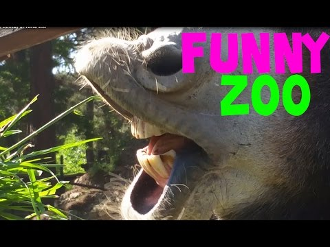 Funny and Cute Zoo Animals Compilation June 2015