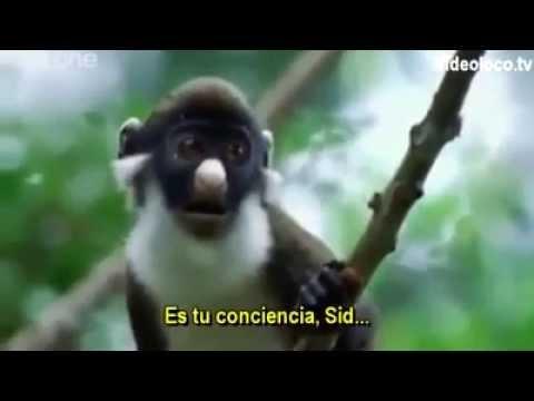 BBC Funny Talking Animals – Walk On The Wild Side (Subtitulado al español)