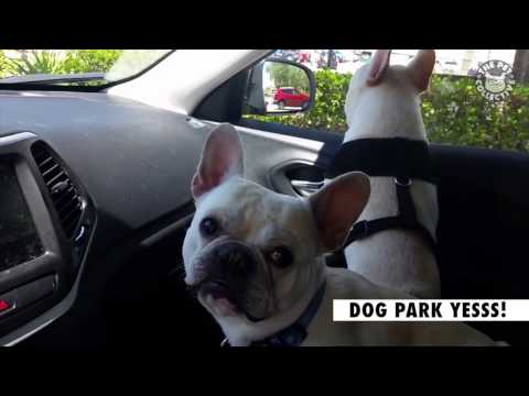 16 Funny Pets Video Compilation 2016