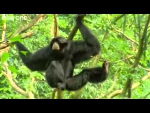 BEST OF Funny Talking Animals – Walk on the Wild Side