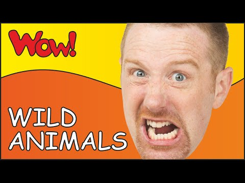 Steve and Maggie Racing throught a Wild Animal Safari | Learn English Kids in English funny stories