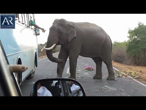 Wild Elephants Blocks the Roads on Kerala | Latest Funny Animal Videos | AR Entertainments