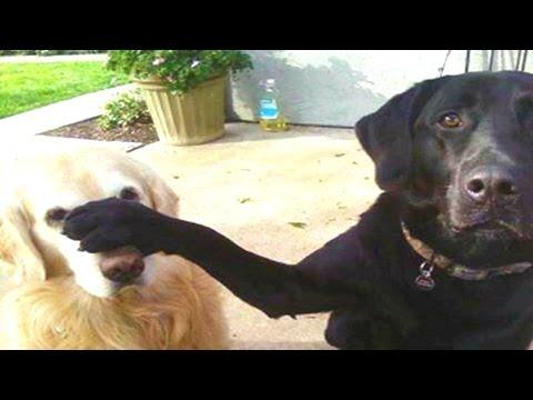 FUNNY DOG VIDEOS 5