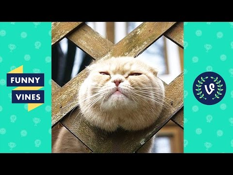 Funny Cats Compilation 2017 – Best Funny Cat Videos | Funny Vines