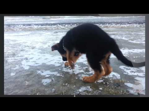 Funny Animals on Ice Compilation! (BEST FUNNY ANIMAL COMPILATION)