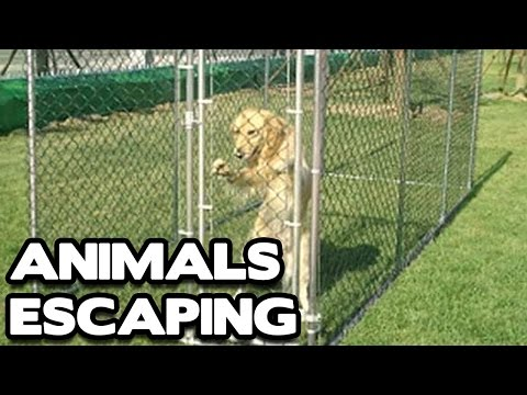 Animal Escape Compilation! (BEST FUNNY ANIMAL COMPILATION)