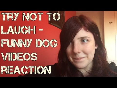 Try Not To Laugh – Funny Dog Videos Reaction