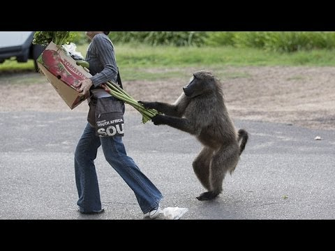 Animals can be so annoying  – Funny animal compilation