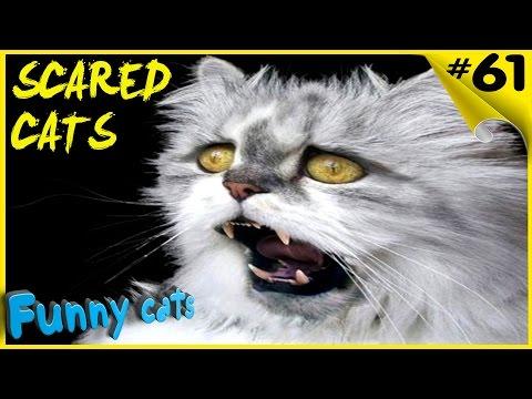 Приколы с котами Best Scared Cats Compilation 2017 FUNNY CATS