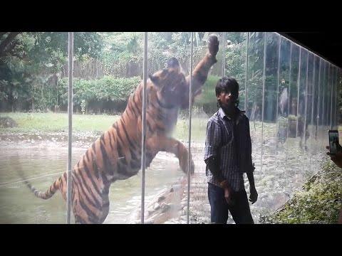 Zoo Animals Attacks ? [Epic Laughs]