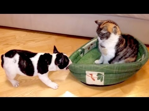Wanna LAUGH? Funny DOGS will take care of it! – The BEST VIDEO of the YEAR