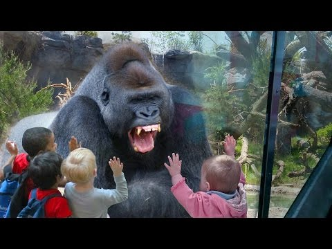 FUNNY Wild Animals Play & Attack Babies Fail Because Glasses in the Zoo | Funny Complilation