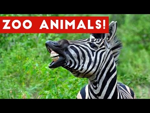 The Funniest Zoo Animals Home Video Bloopers of 2017 Weekly Compilation | Funny Pet Videos