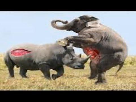 Most Amazing Wild Animal Attacks – Animal Attack Human – Funny Animal Attacks:)