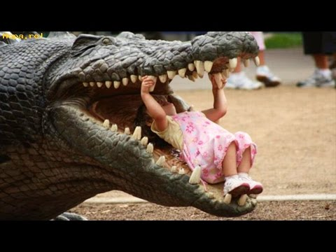 Kids and Zoo Animals – Funniest Videos – TRY NOT TO LAUGH!