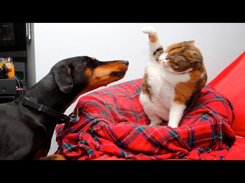 Funny Cats And Dogs Part 5 – Funny Cats vs Dogs – Funny Animals Compilation