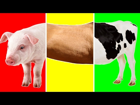 Farm Animals with Wrong Body | Funny Animals Video for Kids | Learn Farm Animals