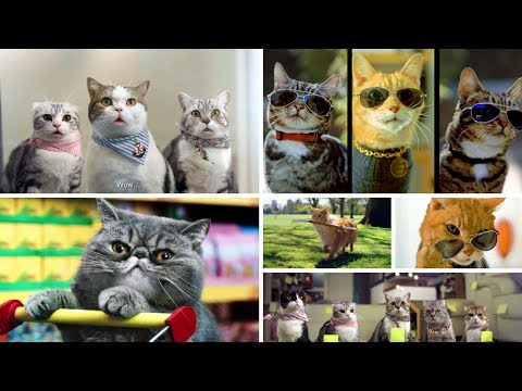 15 The Best Most Funny Cats in Commercials