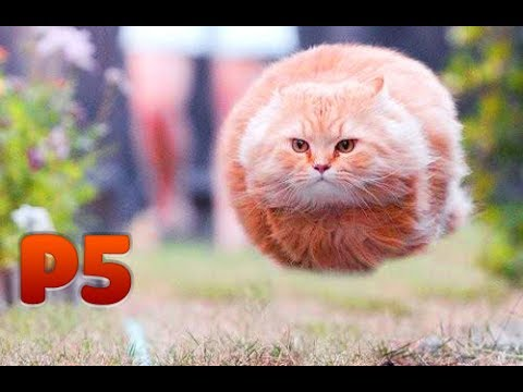 Mèo và đồng bọn P5 | Funny Cats, Kittens Video Compilation 2017 | Try Not To Laugh!!!