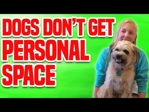 Dogs Don't Get Personal Space | Funny Dog Compilation