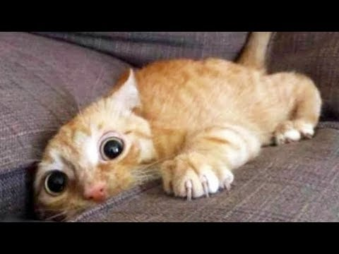 LAUGH UNSTOPPABLE at FUNNY ANIMALS – Super FUNNY ANIMAL videos