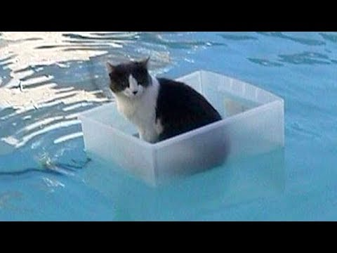CATS will make you LAUGH YOUR HEAD OFF – Funny CAT compilation