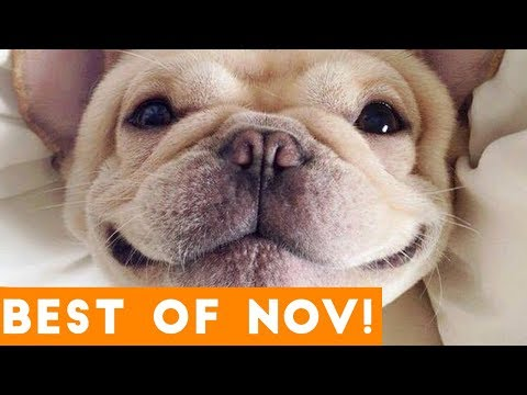 Funniest Pet Reactions & Bloopers of October 2017 | Funny Pet Videos
