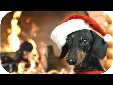 DOG meet CHRISTMAS! Cute and funny animal video!