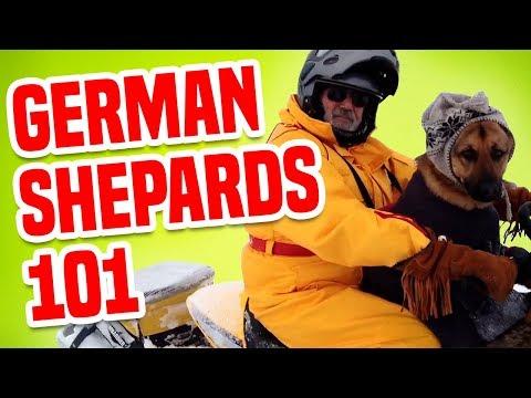 German Shepherds 101 | Funny Dog Videos