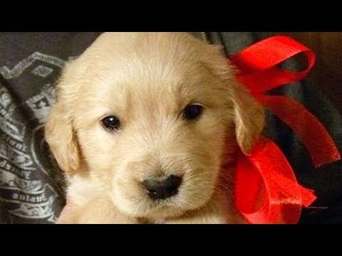 Cute and funny dog videos – Funny puppies compilation!