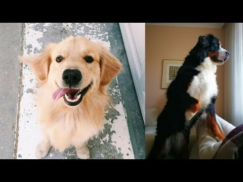 Funny Dogs Video Compilation 2018 #10