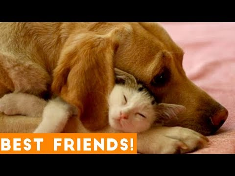Cutest Animal Friendships Compilation 2018| Funny Pet Videos