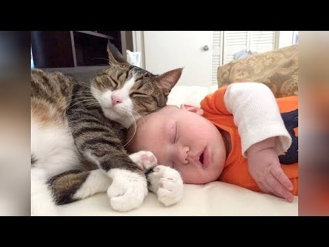 The FUNNIEST and CUTEST videos you'll see today! – Super CUTE BABIES sleeping with CATS & DOGS